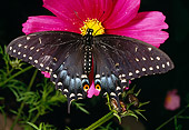INS 01 RD0081 01