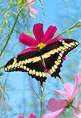 INS 01 RD0092 01