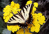INS 01 RD0093 01