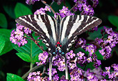 INS 01 RD0094 01