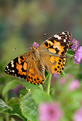 INS 01 TK0001 01