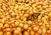 INS 01 TK0004 01