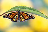 INS 01 TK0006 01