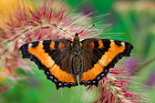 INS 01 TK0007 01