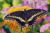 INS 01 TK0008 01