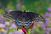 INS 01 TK0009 01