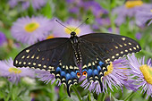 INS 01 TK0010 01