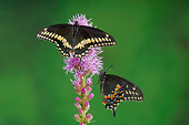 INS 01 TK0012 01