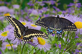 INS 01 TK0013 01