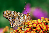INS 01 TK0015 01