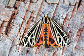 INS 01 TK0016 01
