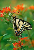 INS 01 TL0001 01