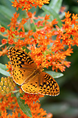 INS 02 DA0008 01