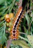 INS 02 MH0001 01