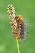 INS 02 WF0008 01