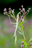 INS 03 LS0002 01