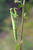 INS 03 WF0003 01