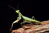 INS 03 WF0006 01