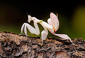INS 03 WF0007 01