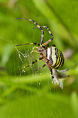 INS 04 AC0006 01