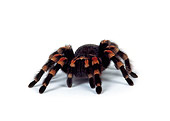 INS 04 RK0001 07