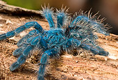 INS 04 WF0001 01
