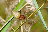 INS 04 WF0002 01