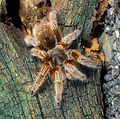 INS 04 WF0005 01