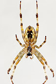 INS 04 WF0006 01