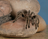 INS 04 RK0007 01