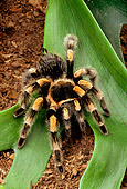 INS 04 TK0001 01