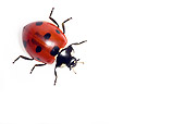 INS 05 KH0001 01