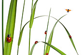 INS 05 KH0004 01