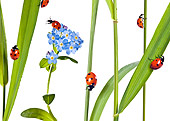 INS 05 KH0005 01