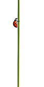 INS 05 KH0006 01