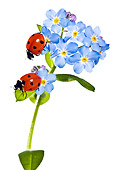 INS 05 KH0007 01
