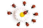 INS 05 KH0010 01