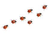 INS 05 KH0013 01