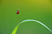 INS 05 KH0015 01