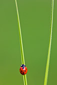 INS 05 KH0018 01