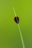 INS 05 KH0019 01