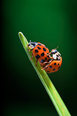 INS 05 TK0001 01