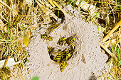 INS 06 TL0001 01