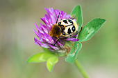 INS 08 AC0014 01