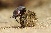 INS 08 HP0001 01