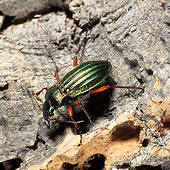 INS 08 WF0002 01