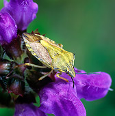 INS 08 WF0003 01