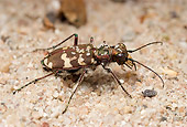 INS 08 WF0011 01