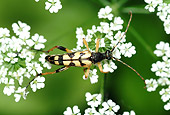 INS 08 WF0013 01