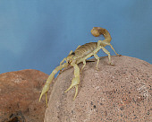 INS 09 RK0001 01